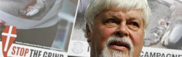 Arrestato il capitano di Sea Shepherd. L'accusa: un'azione in mare del 2002