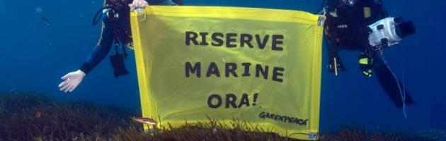 """Riserve marine in agonia, ma il governo: """"Non ci sono fondi, autofinanziatevi"""""""