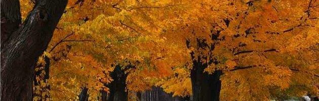 Salute, i nati in autunno diventano centenari più spesso degli altri