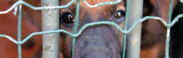Lav, ogni ora un reato contro gli animali Ed è allarme criminalità organizzata