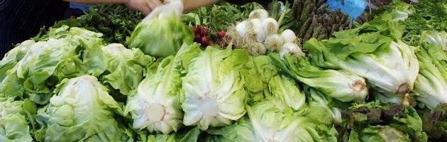 Verdure confezionate, al primo giorno batteri al 40% e dopo cinque all'87%