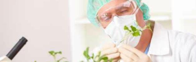 Mais ogm spacciato per bio e pesticidi nella soia: sequestri in cinque regioni