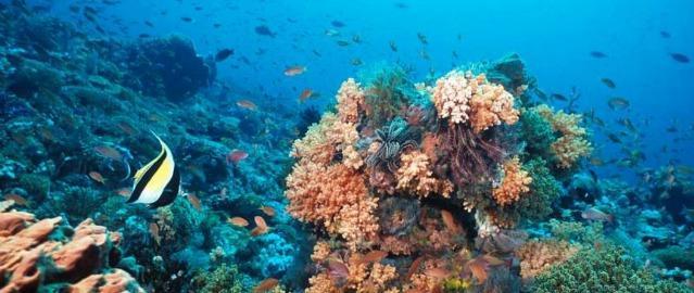 Una cantina in fondo al mare: il vino che invecchia negli abissi