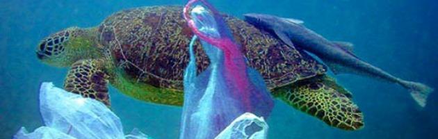 Nel Mediterraneo 3 miliardi di rifiuti fanno strage di uccelli e mammiferi