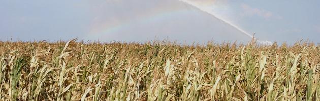 Catastrofi ambientali, allarme sulla relazione pericolosa tra clima e prezzo del cibo