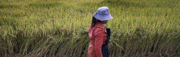 Cina, rimosse due milioni di tombe, per fare spazio ai campi agricoli