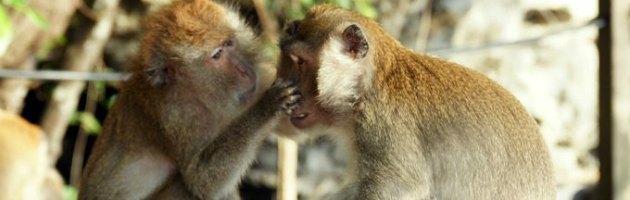 Creato il computer che simula il cervello di una scimmia