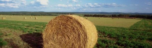 Agricoltura, consumo di energia cala del 40% in 2 anni con la tecnologia green