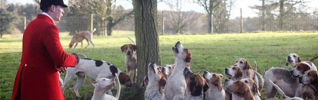 Londra, la battaglia politica si combatte (anche) sulla caccia alla volpe