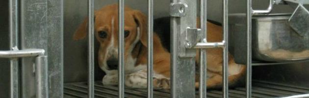 """Vivisezione, Legambiente: """"Ogni anno scompare il 60% degli animali testati"""""""