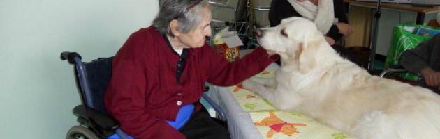Cani e gatti in ospedale, per l'Emilia Romagna la pet therapy è legge