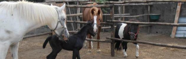 Fattoria lager a Rimini, trovate sei carcasse di cavalli