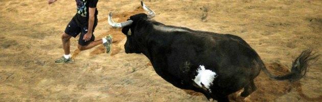 Toro Raton nell'arena