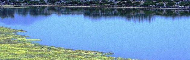 """Inquinamento, """"I pesticidi contaminano metà delle acque di laghi e fiumi italiani"""""""