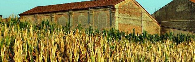 Agricoltura, cancerogeno un terzo del mais del 2012: finirà negli impianti di biogas