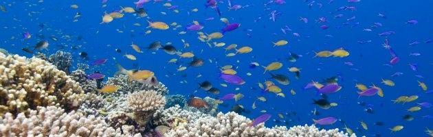 """Australia, è ufficiale: """"Sandy Island"""" nel mar dei Coralli non esiste"""