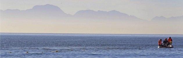 """Oceani, """"oltre 400 zone morte, riserve di pesce al limite, barriere coralline in pezzi"""""""