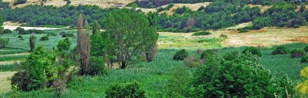 """Agro Romano, cimitero su terreni vincolati: tra i """"costruttori"""" anche consigliere"""