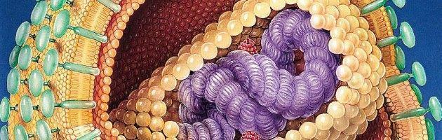 "Aids, ricerca Italia-Usa: ""Più vicini a cura definitiva eliminando riserve virus"""