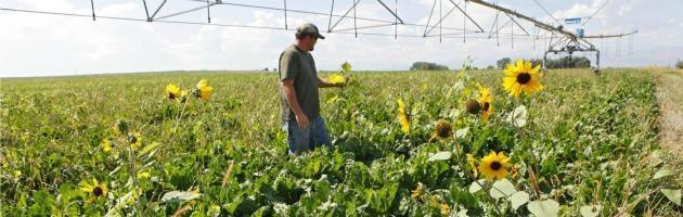 Agricoltura OGM