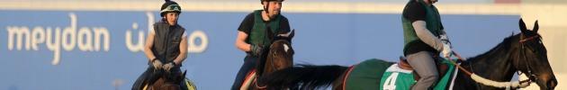 Equitazione, se a galoppare è il debito: buco di 7 milioni alla federazione italiana