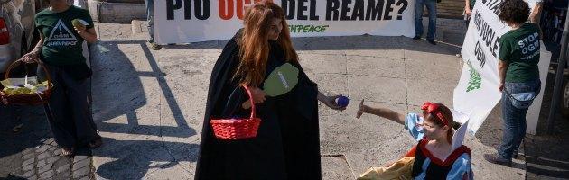 """Ogm, Greenpeace denuncia: """"Coltivazioni in Friuli"""" e chiede legge su biodiversità"""