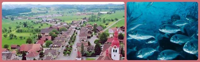 Pesce di mare made in Switzerland, l'ultima trovata di Zurigo