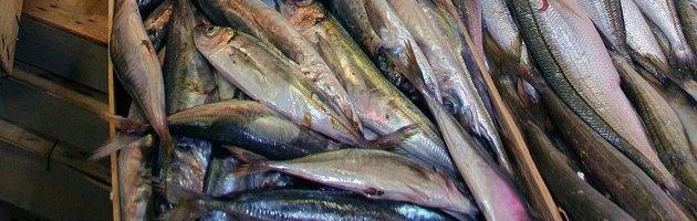 L'overfishing, che depaupera i mari e noi