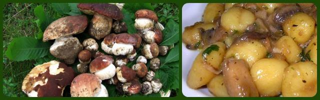 Funghi porcini: ricette gustose e appuntamenti d'autunno