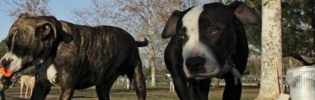 Cani pericolosi, nel Regno Unito 14 anni ai proprietari in caso di attacchi fatali