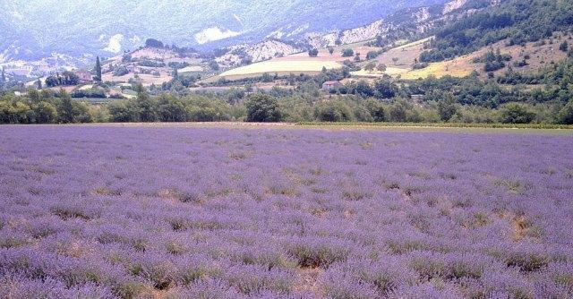 """Francia, petizione contro i pesticidi: """"Cancerogeni, il governo li proibisca"""""""