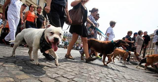 Sant'Arcangelo, bocconi avvelenati per i cani: 500 euro a chi fa i nomi dei killer