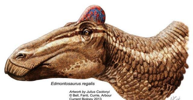 Scopre primo fossile di dinosauro con cresta da gallo. Ma è precario all'Università