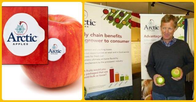 mela geneticamente modificata