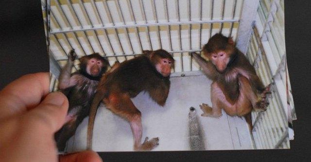 """""""Film sulla vivisezione, Caterina Simonsen venga a vederlo con noi"""""""
