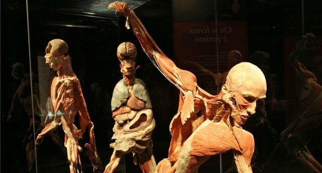Body worlds, il corpo umano in mostra a Bologna.Tra polemiche e boom di visite