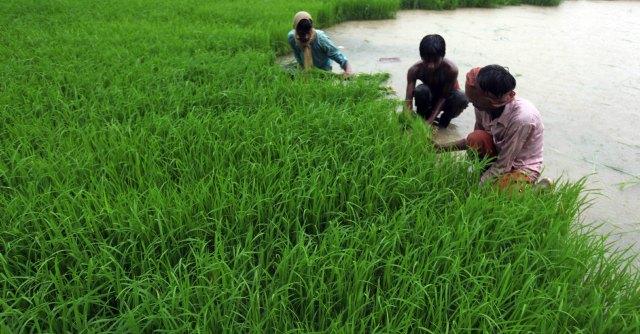 India, debiti e piogge fuori stagione: oltre 300mila contadini suicidati in vent'anni