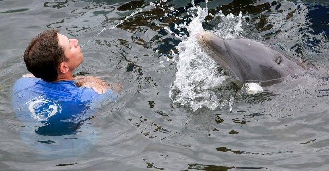 """Delfini, animalisti nelle piazze: """"Chiediamo l'apertura del primo rifugio a mare"""""""