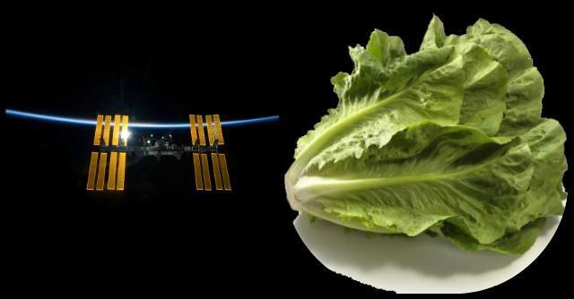 L'orto arriva nello spazio: le verdure in orbita