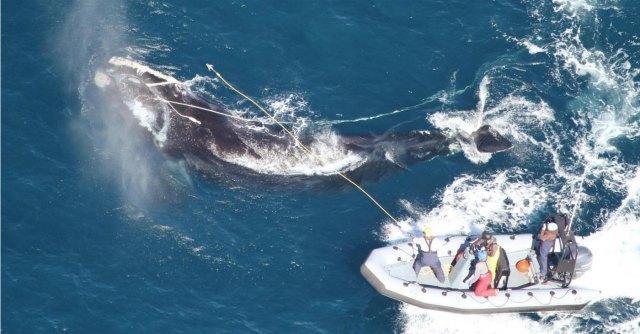 """Giappone, è """"politica"""" la sentenza della corte di giustizia sulla caccia alle balene"""