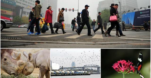 """Biodiversità, Onu: """"L'uomo una minaccia per tutte le specie"""". Italia in ritardo"""