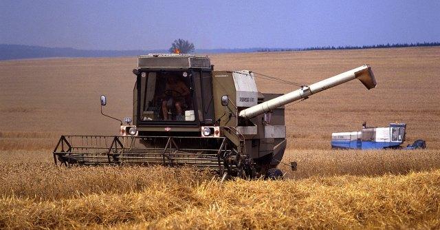 """Ravenna, """"diossina nel grano per gli allevamenti"""": fermate 20 mila tonnellate"""