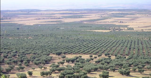 Certificazione etica dell'agricoltura: al via la sperimentazione in Calabria