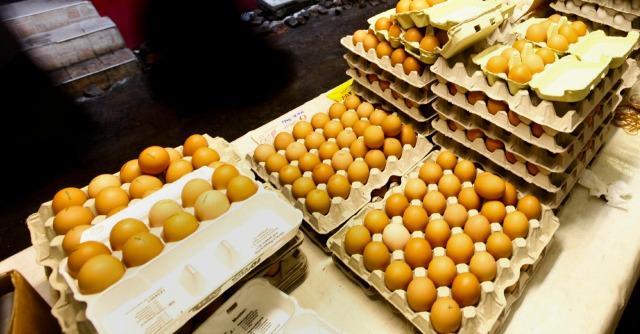 """Russia, Crimea nazionalizza Avangardco che va in tribunale: """"È guerra delle uova"""""""