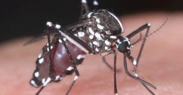 Dengue, confermato caso di infezione in provincia di Modena. Al via disinfestazione