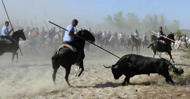 """Spagna, centinaia di ambientalisti bloccano torneo di Tordesillas: """"No a uccisione toro"""""""