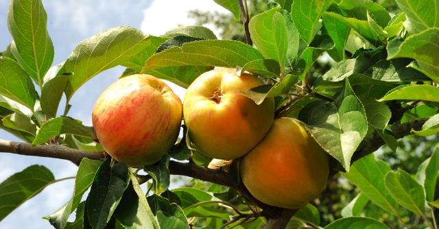 Agricoltura locale: un anno a filiera corta