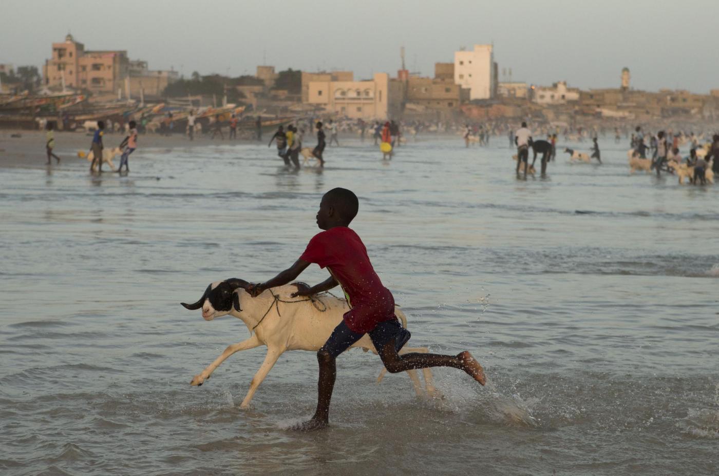 Niamey: uomini e animali