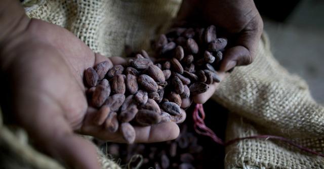 Cioccolato, riconoscere la qualità del cacao per comprare consapevolmente