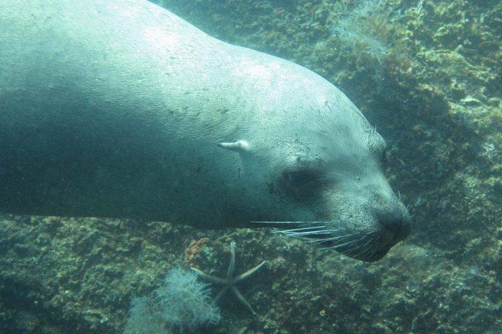 Los Islotes: i leoni marini nell'acquario del mondo